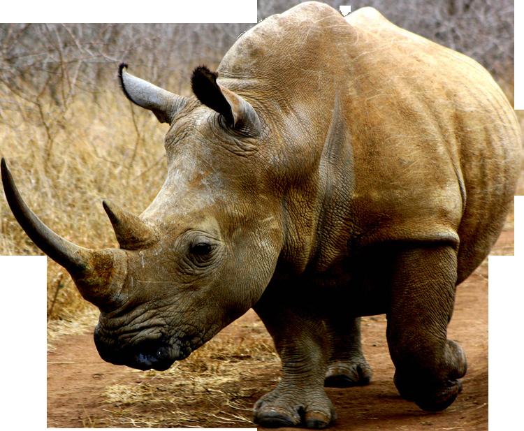 Risultati immagini per rhino png