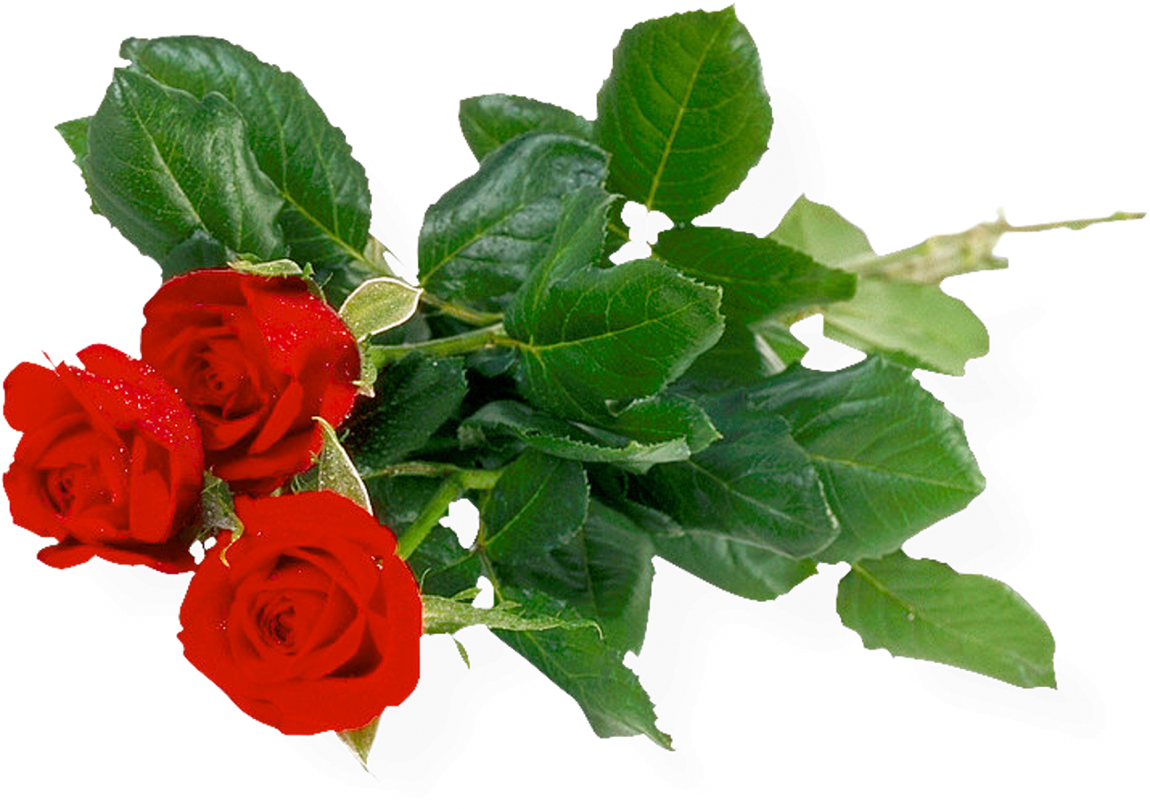 Bouquet of roses PNG image, free picture download