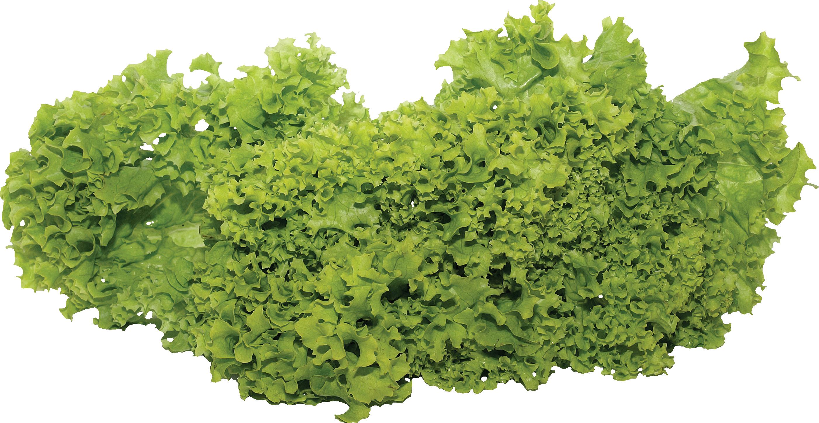 Green Salad Png Image