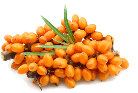 Sea buckthorn PNG