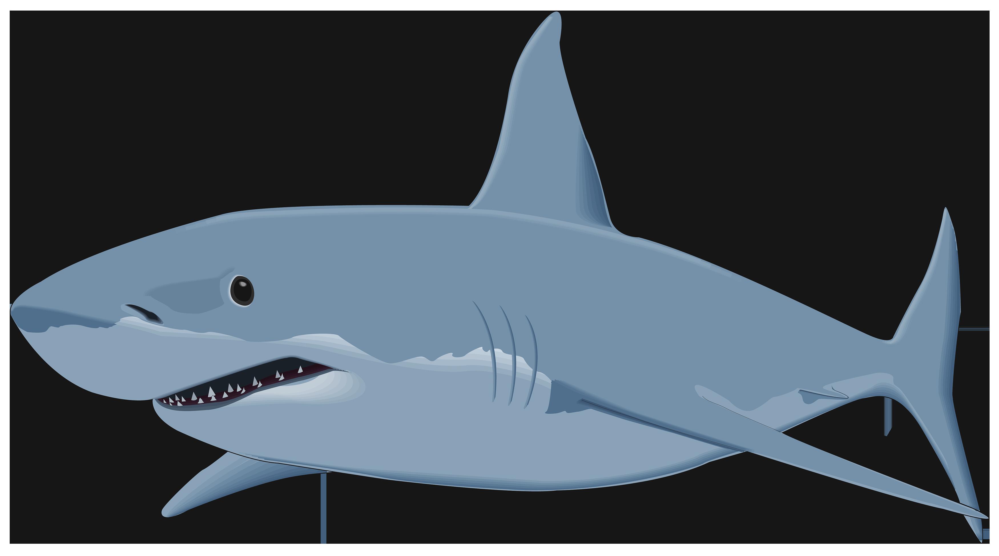 Sharks PNG images free download - 687.0KB