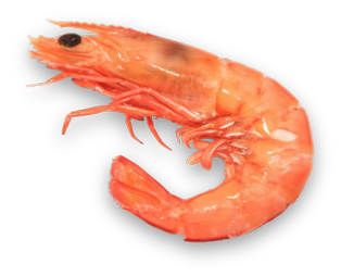 Shrimp PNG