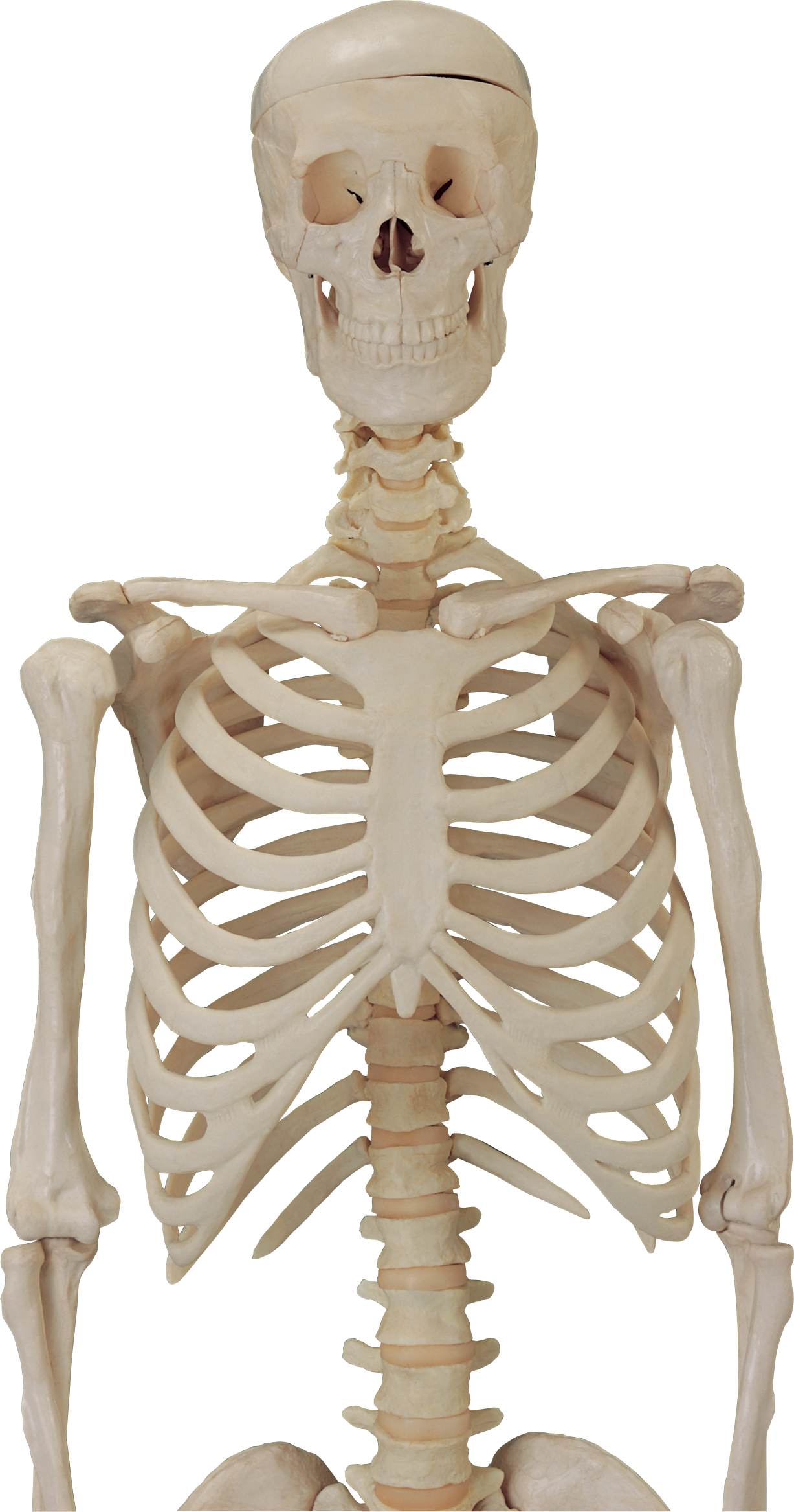 Skeleton PNG