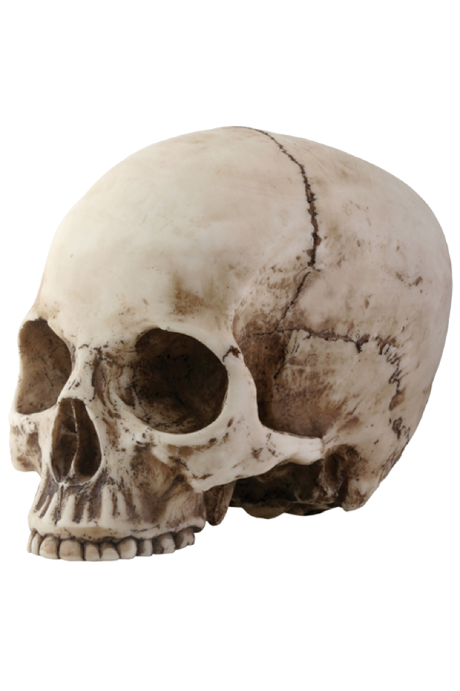 Skeleton, skulls PNG images free download