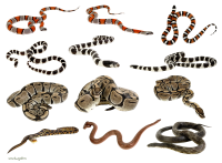 Snakes clipart PNG images
