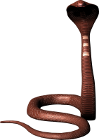 Cobra snake PNG image, free download picture