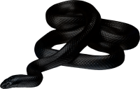 Black snake PNG image picture download free