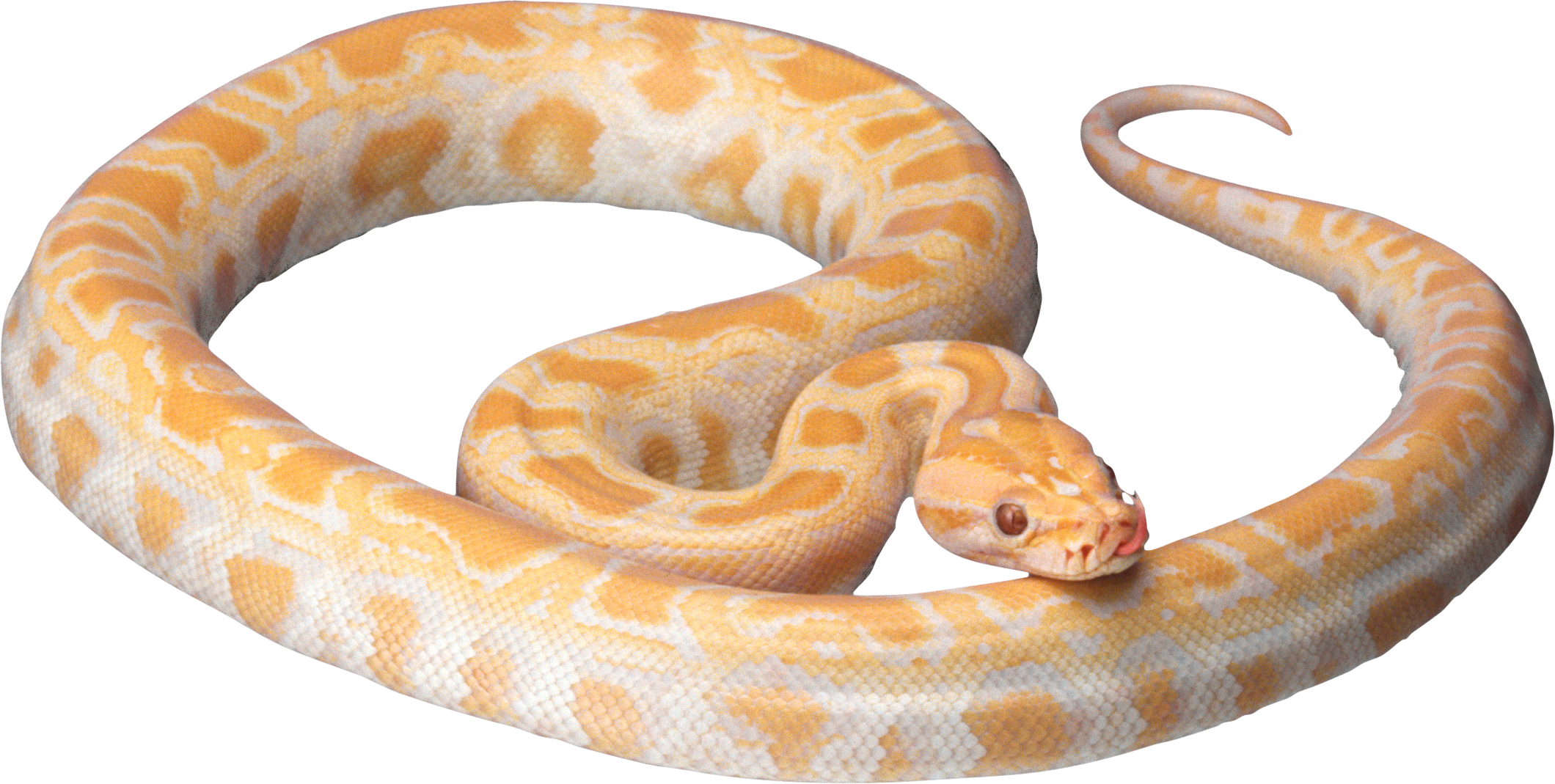White snake PNG image picture download free