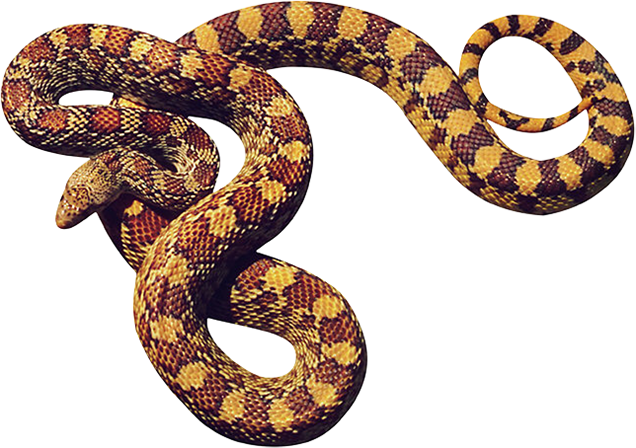 Snake PNG image picture download free