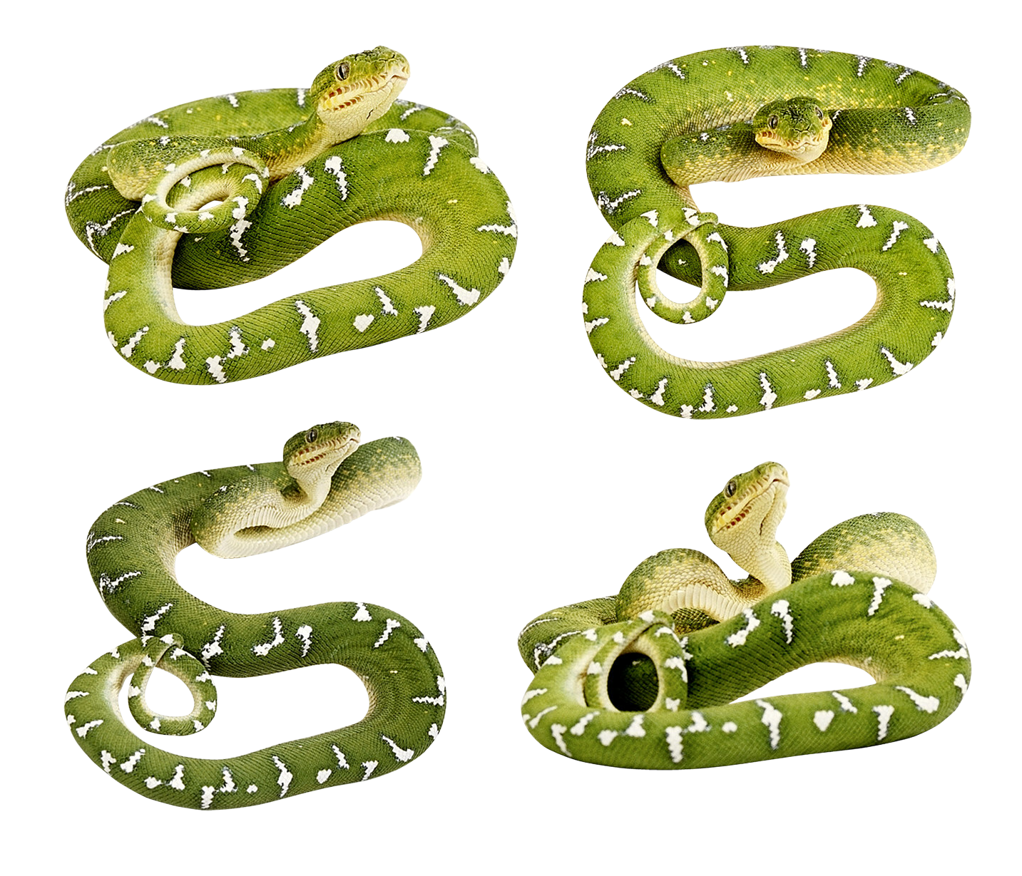 Green snakes PNG image