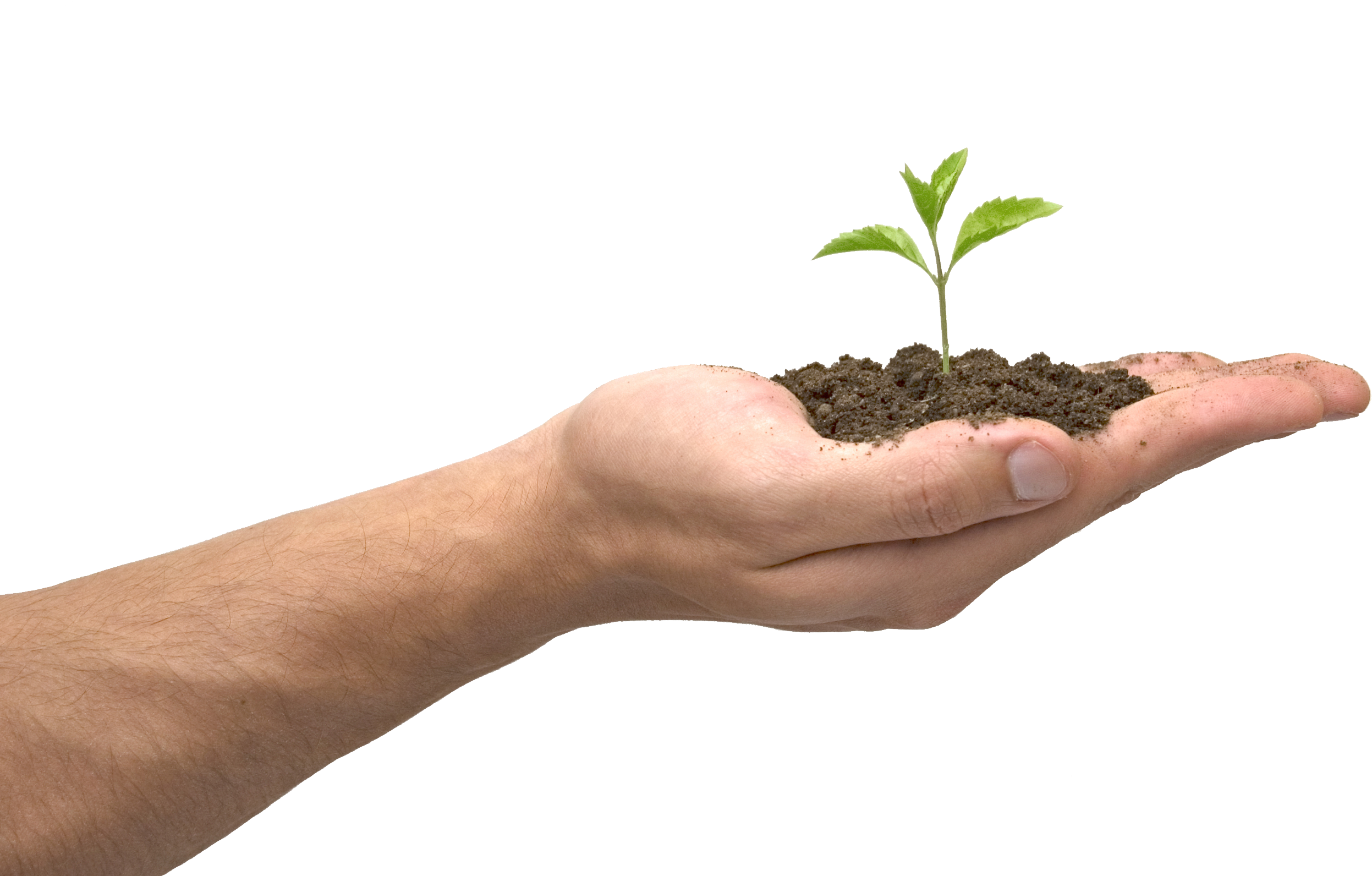 Soil in hand PNG