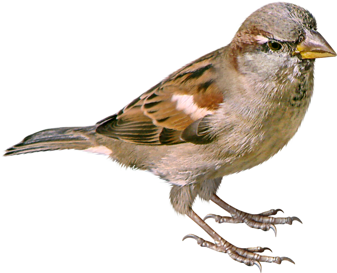 Bird Names That Start With The Letter R