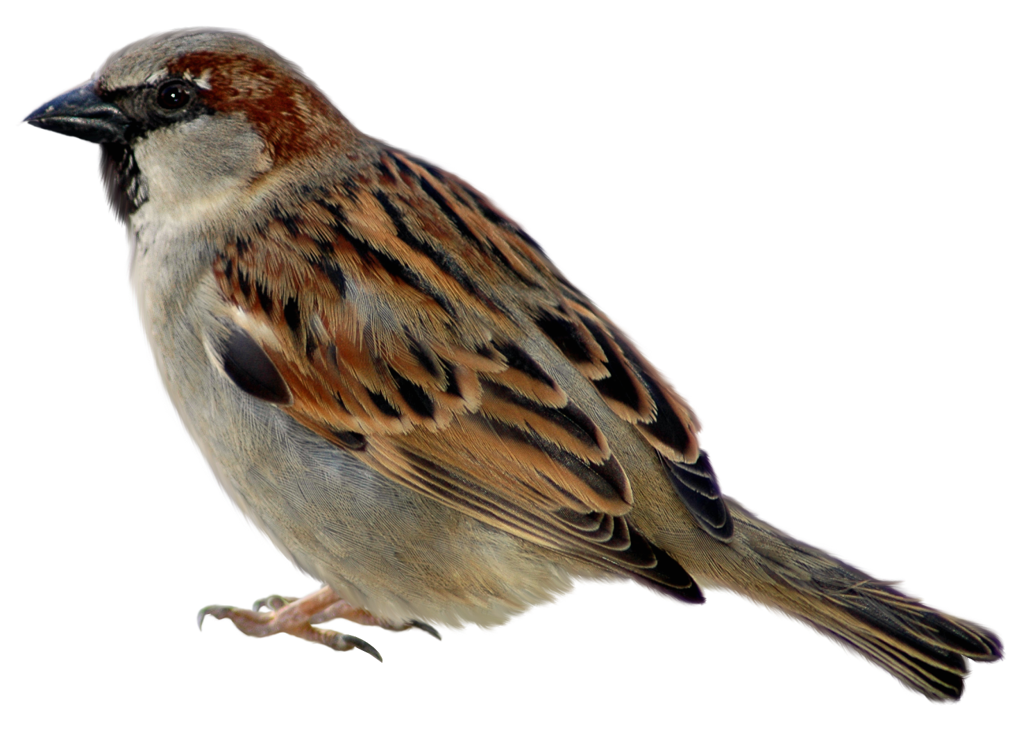 Can Birds Eat Fruit Cake