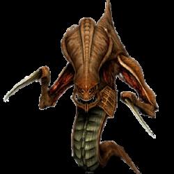 Starcraft zerg PNG