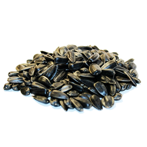 Sunflower seeds PNG