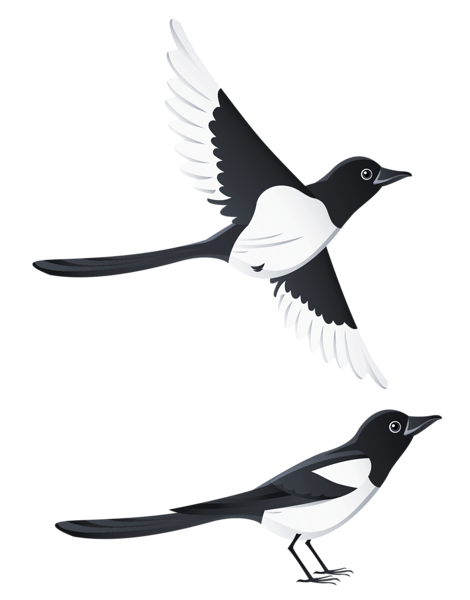 Swallows PNG