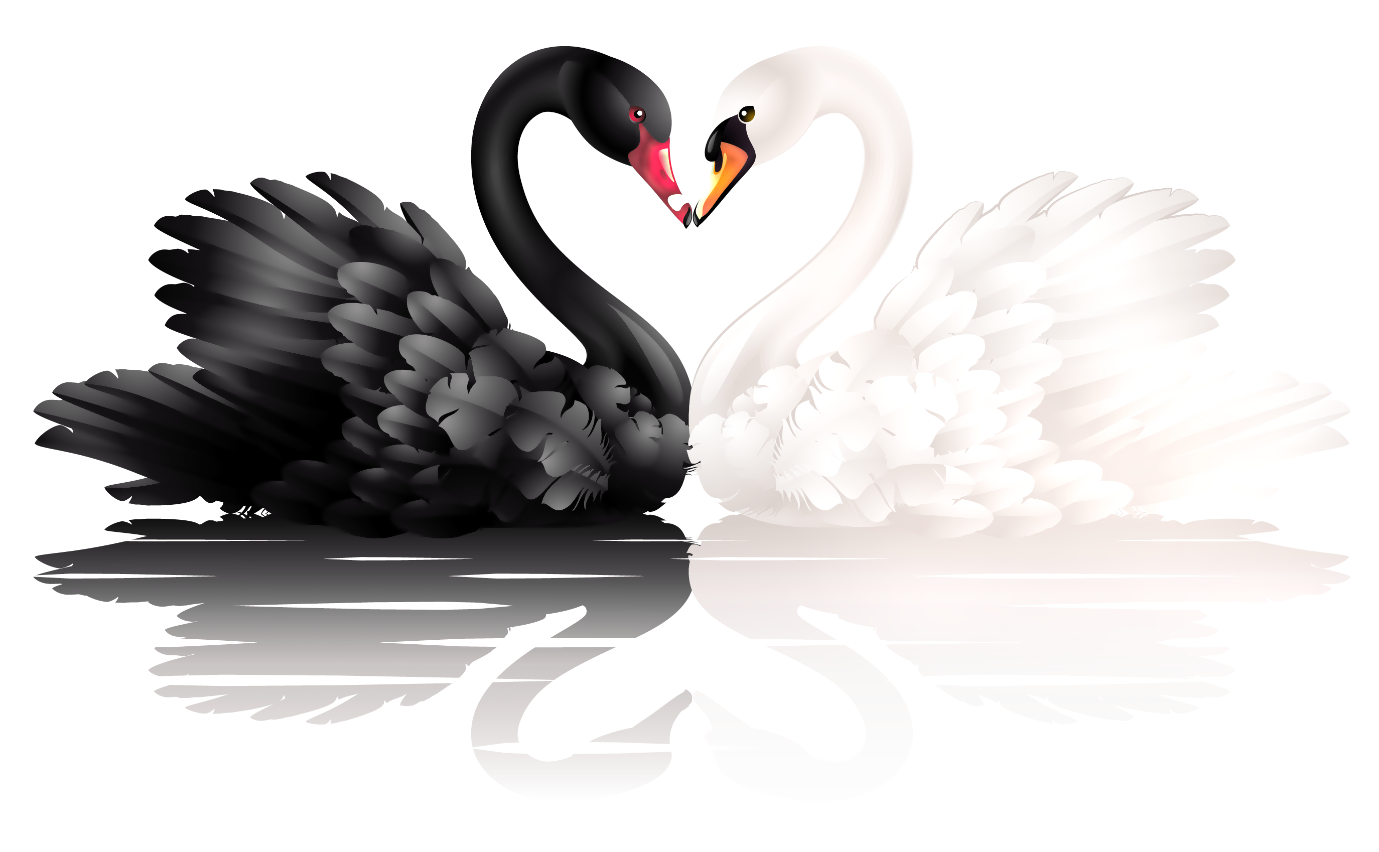 Black and white swan PNG