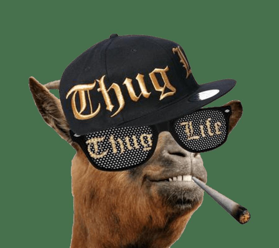 Thug life goat PNG