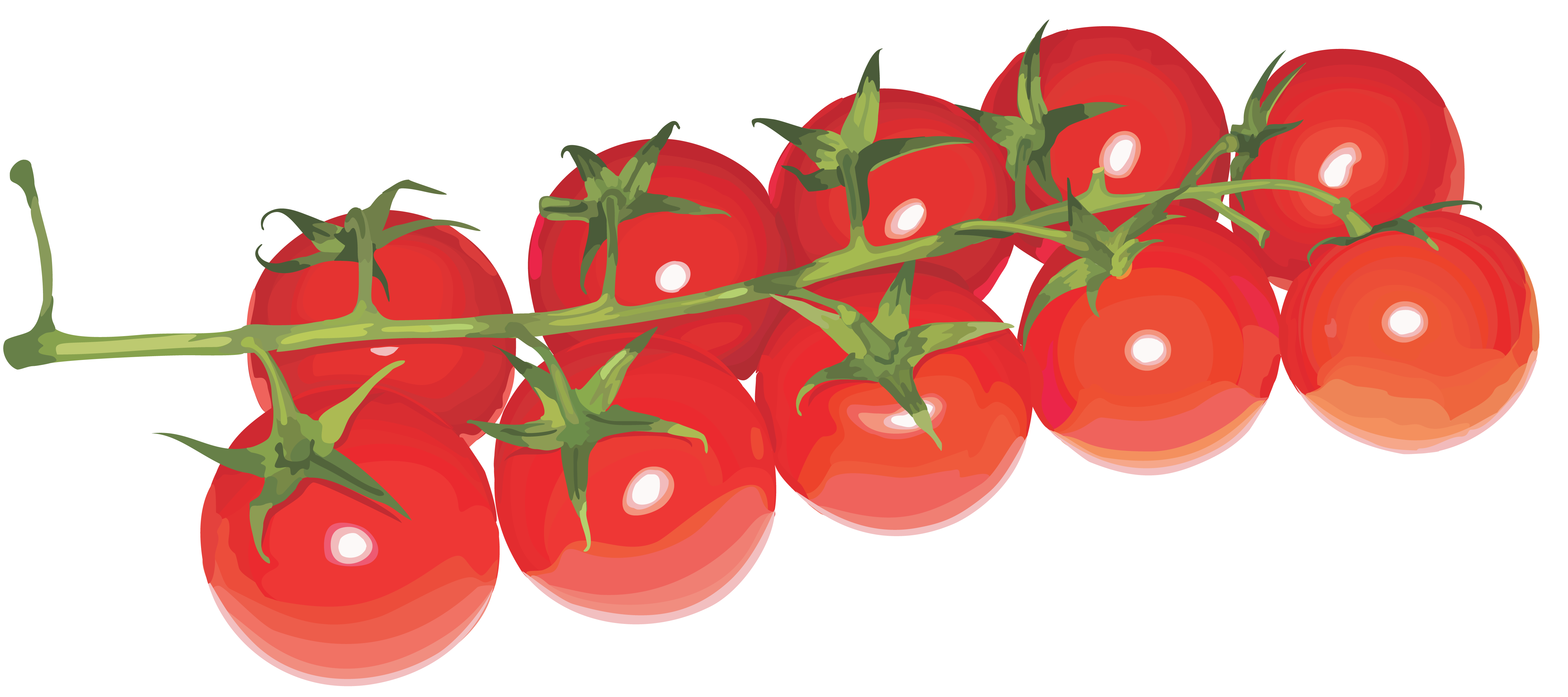 Tomatoes cherry PNG