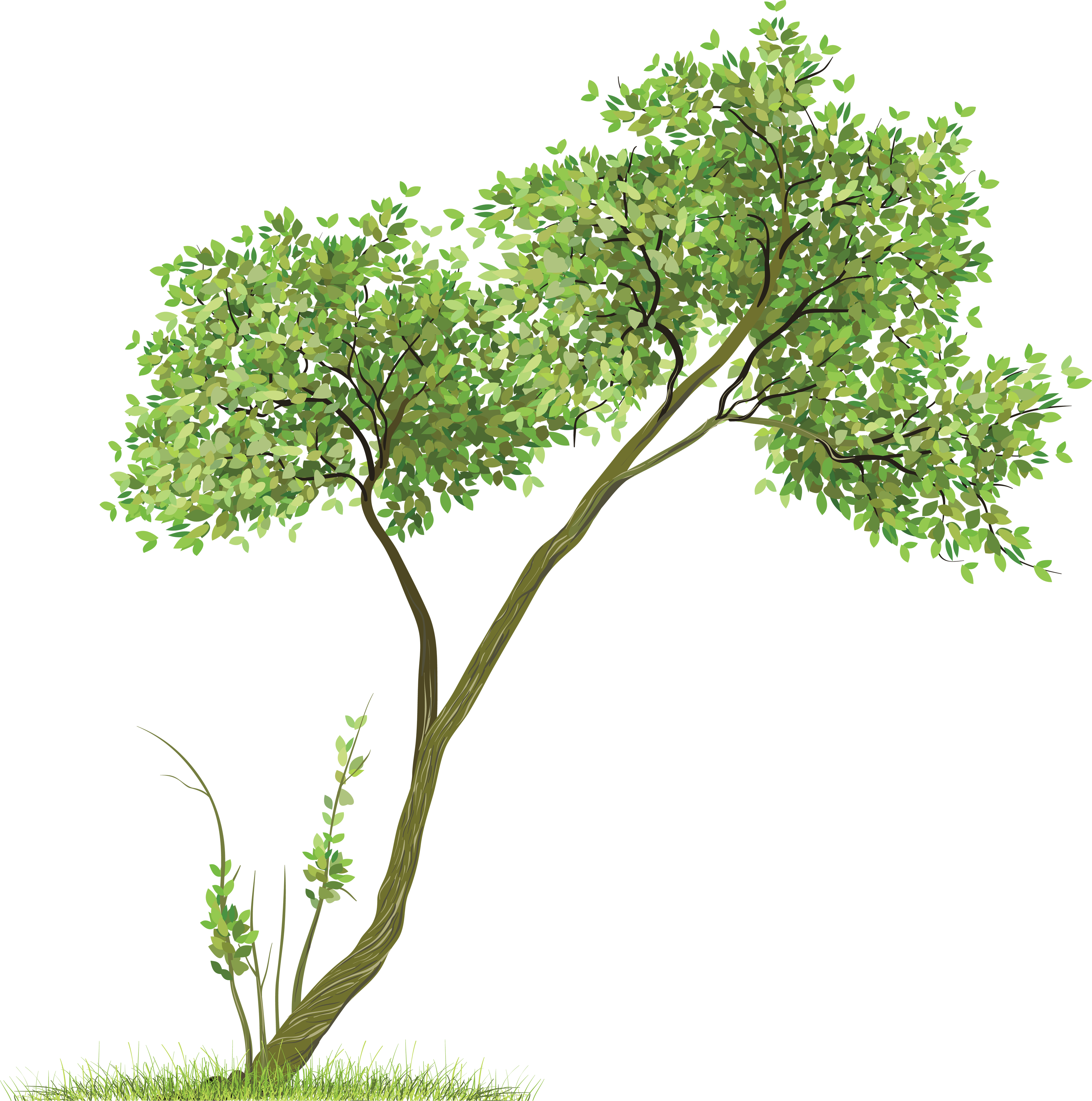 tree png image