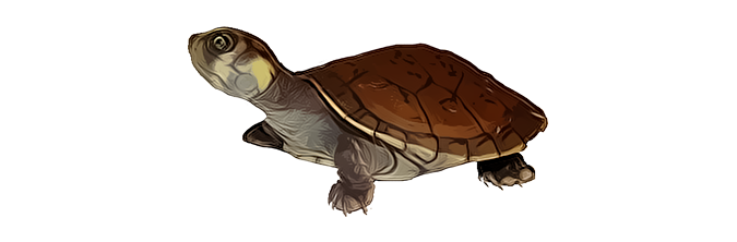 Turtle PNG images Download