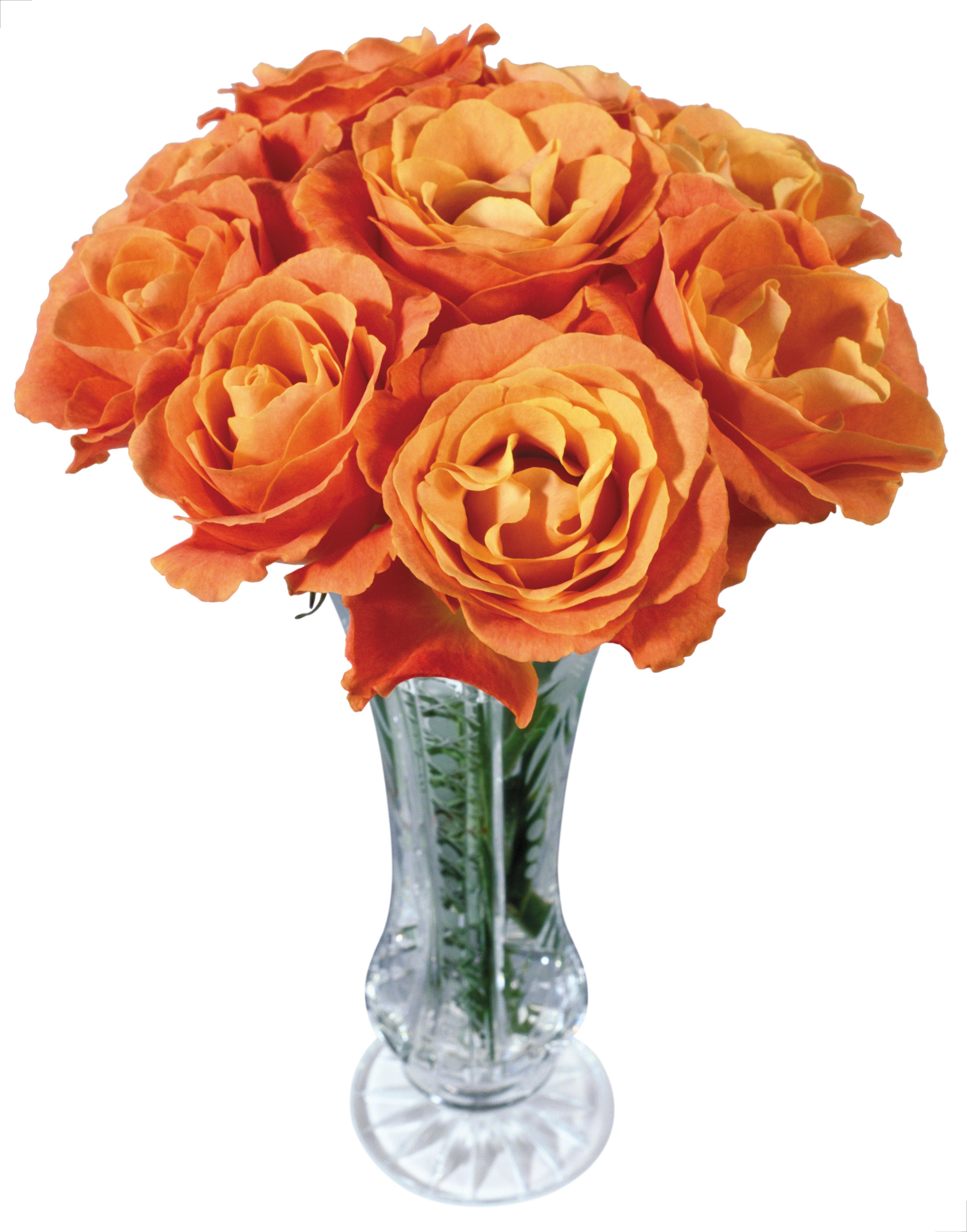 Vase Png Images Free Download