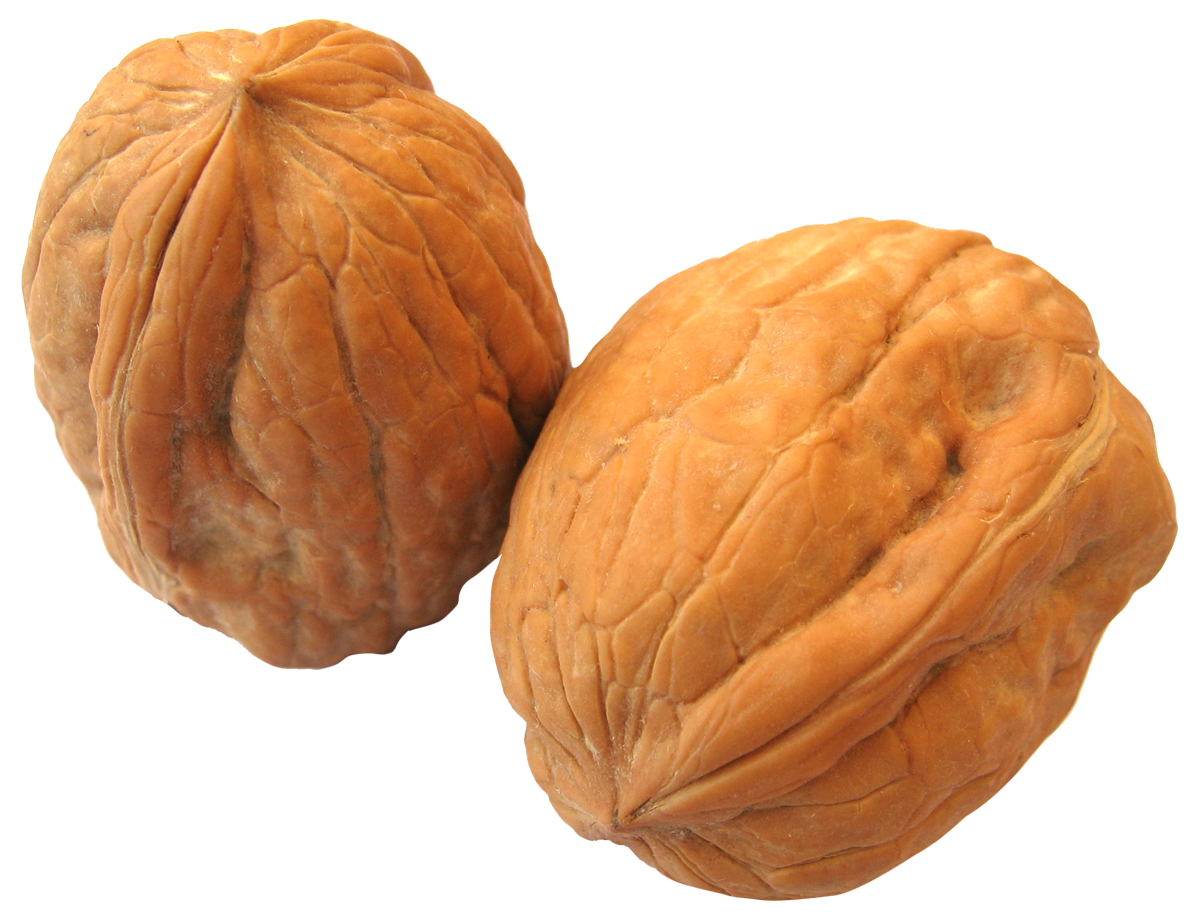 Walnut PNG