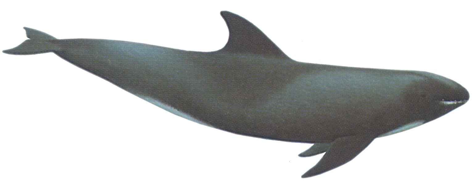 Whale PNG