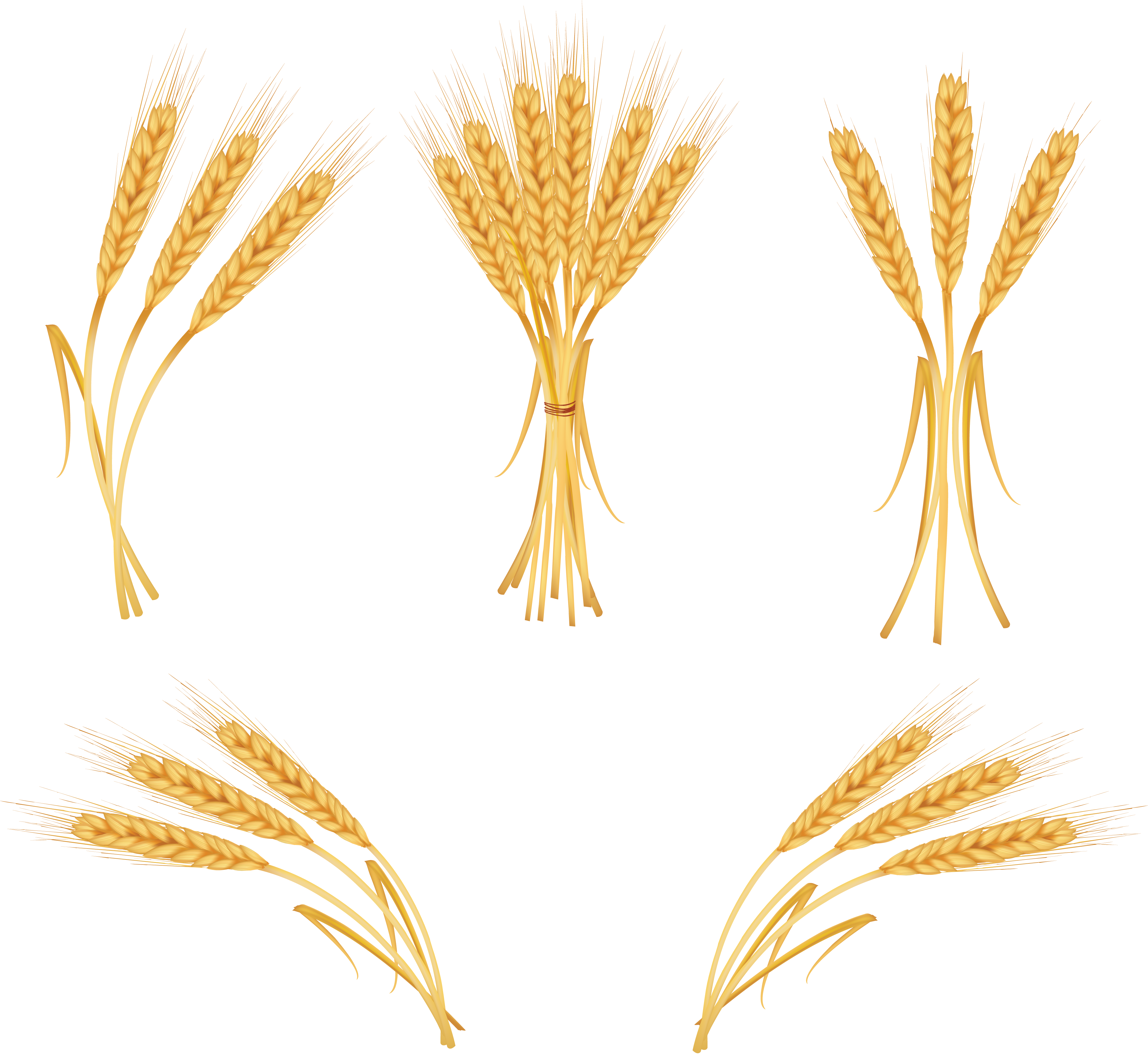 Wheat PNG