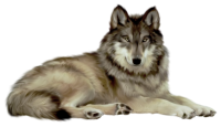 white wolf png image, picture, download
