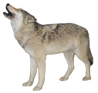 black wolf png image, picture, download