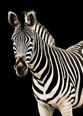 Best Animals To Paint